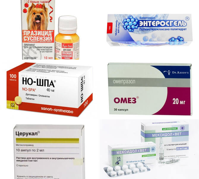 Лекарства от рвоты для собак
