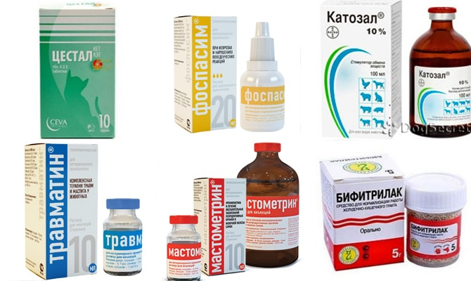 Лекарства для кота