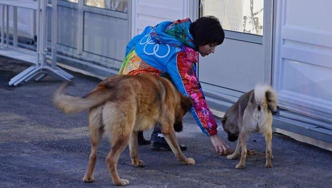 Девушка кормит бездомных собак