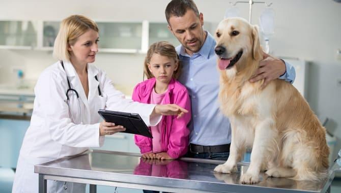 Собака с хозяином у врача