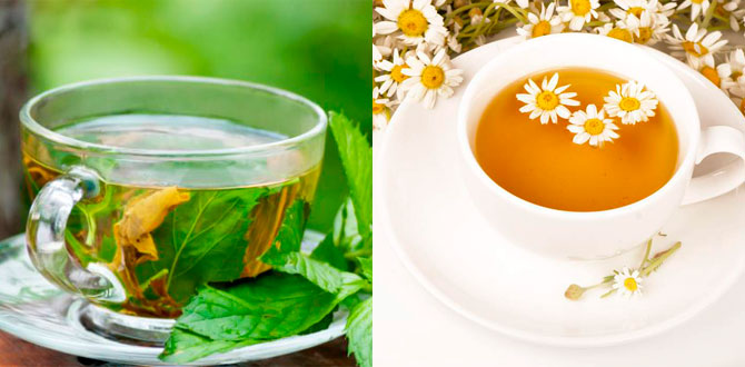Чай из мяты, ромашки