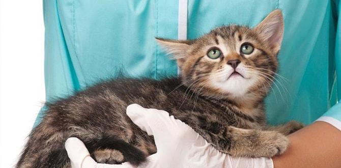 Котенок на руках врача
