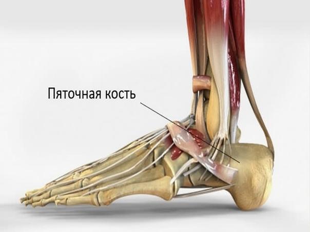 Пяточная кость: строение и возможные заболевания