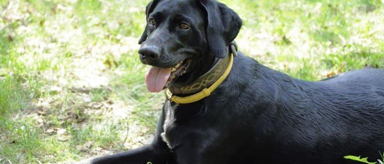 ТОП-10 эффективных ошейников для собак против блох и клещей